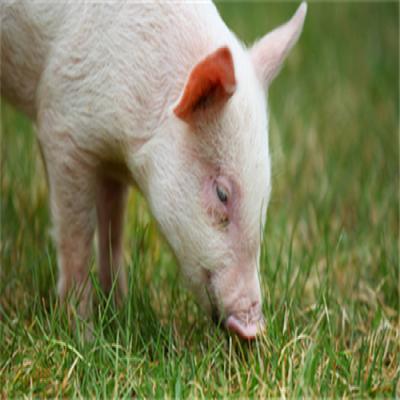 四川29个县区新开工生猪规模养殖项目98个投资72.08亿元